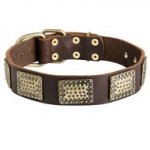 Leather Black Russian Terrier Collar with Massive Brass Plates