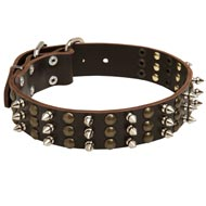 Black Russian Terrier Spikes and Studs Rows Leather Dog Collar