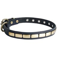 Black Russian Terrier Leather Collar Brass Plates 25 mm