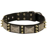 Black Russian Terrier Spiked Leather Collar with Nickel Plates