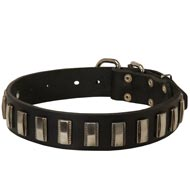 Black Russian Terrier Leather Collar with Shiny Plates