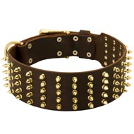 Wide Spiked Leather Black Russian Terrier Collar