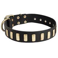 Fancy Leather Black Russian Terrier Collar with Brass Plates