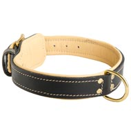 Padded Leather Black Russian Terrier Collar