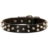 Fancy Design Leather Black Russian Terrier Collar with Nickel Pyramids
