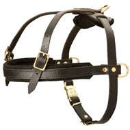Leather Black Russian Terrier Harness for Tracking and Pulling
