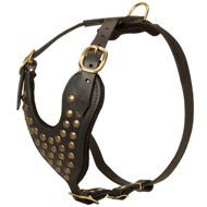 Adjustable Studded Leather Black Russian Terrier Harness for Fashion Walking