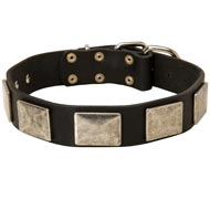 Leather Black Russian Terrier Collar with Large Nickel Plates