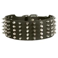 Black Russian Terrier Leather Collar Spiked and Studded
