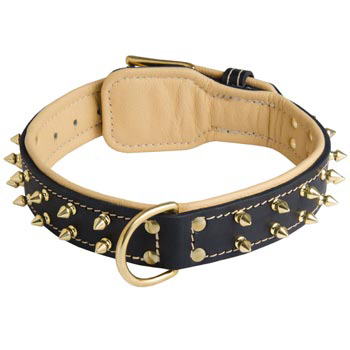 Leather Black Russian Terrier Collar Spiked Padded with Nappa Leather Adjustable