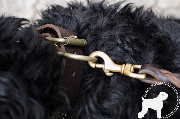 Black Russian Terrier collar with dependable non-rusting brass hardware
