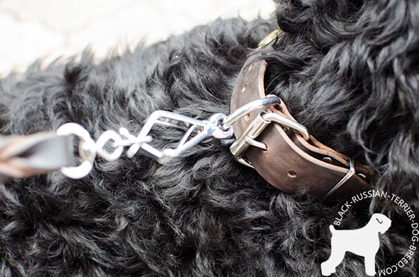 Black Russian Terrier collar with durable fittings