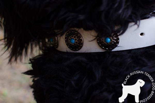 Black Russian Terrier collar with fixed circles