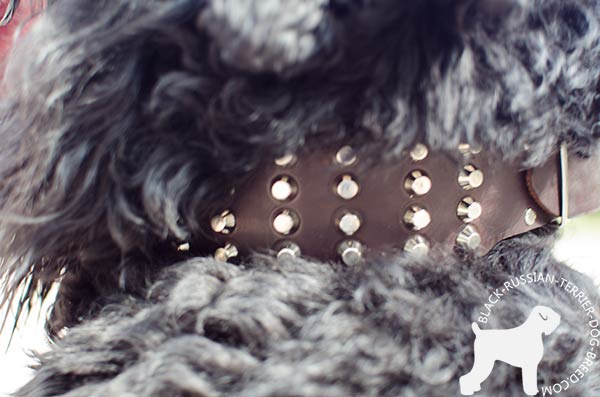 Black Russian Terrier genuine leather Collar with handset nickel pyramids