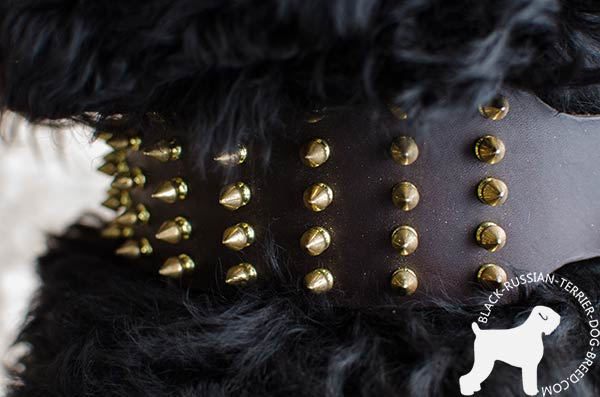 Black Russian Terrier genuine leather collar with manually set spikes