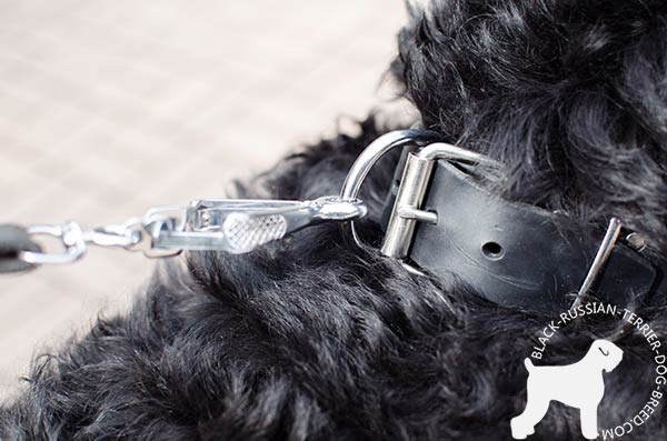 Black Russian Terrier collar with adjustable buckle