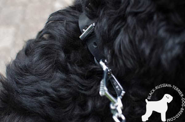 Black Russian Terrier leather collar with nickel-plated hardware
