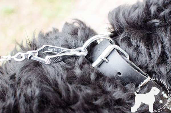Black Russian Terrier reliable collar with non-rusting fittings