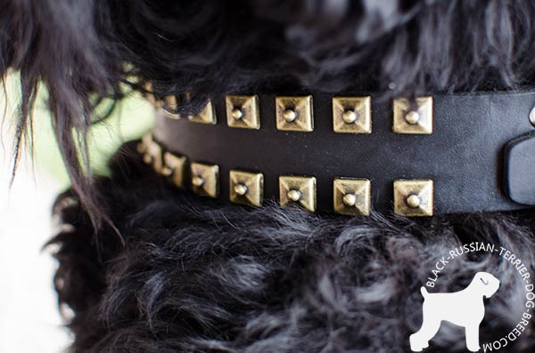 Black Russian Terrier strong leather collar with riveted brass studs