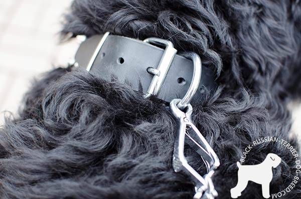 Black Russian Terrier natural leather collar with rust-free fittings