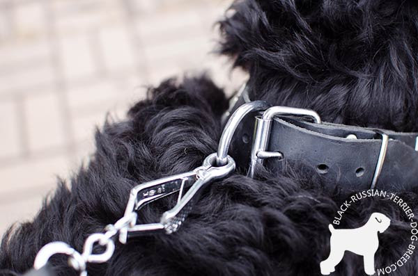 Black Russian Terrier collar with rustproof nickel fittings