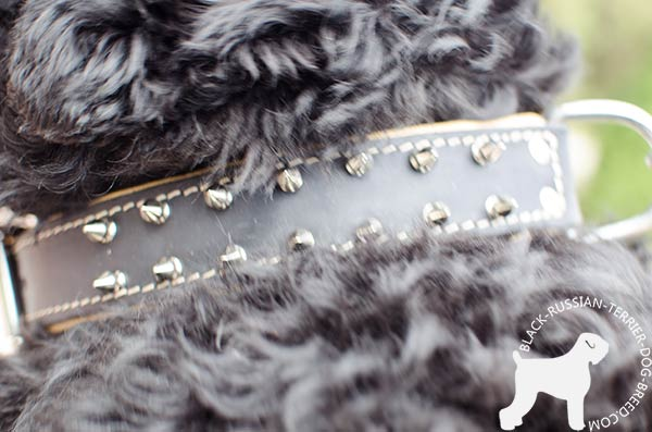 Spiked Black Russian Terrier leather collar