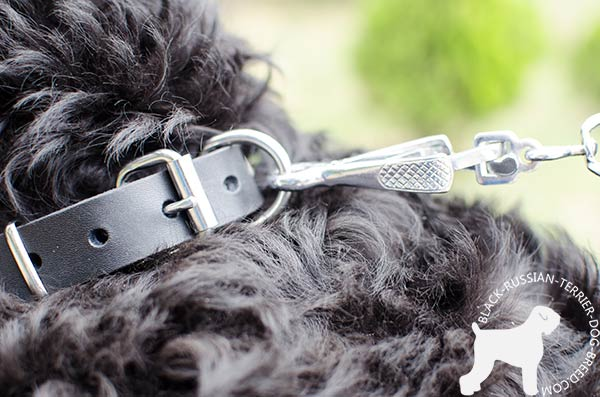 Black Russian Terrier collar with strong nickel hardware