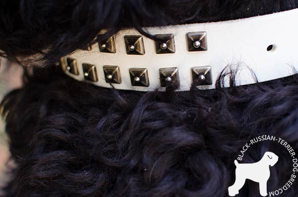 Black Russian Terrier collar decorated with square studs set in 2 rows