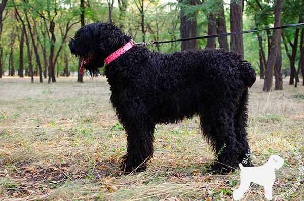 Black Russian Terrier leather collar for stylish promenades