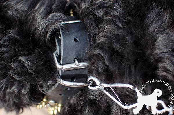 Black Russian Terrier collar with trustworthy adjustable buckle