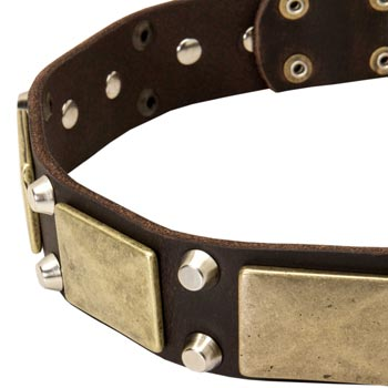 Leather Black Russian Terrier Collar with Nickel Studs