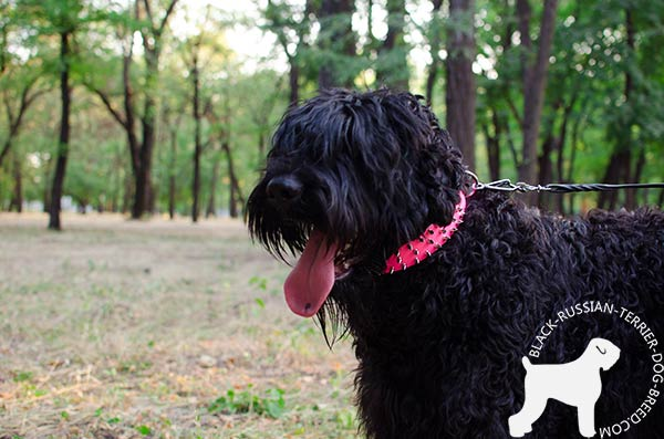 Black Russian Terrier pink leather collar adjustable  with spikes for walking