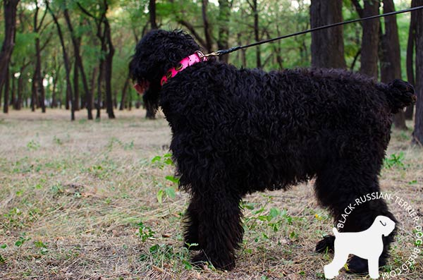 Black-Russian-Terrier leather-collar of lightweight material with d-ring for leash attachment for quality control