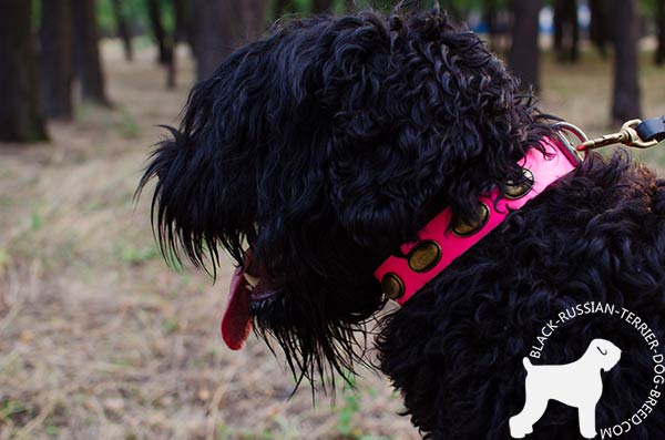 Black-Russian-Terrier leather-collar with non-corrosive plates for walking