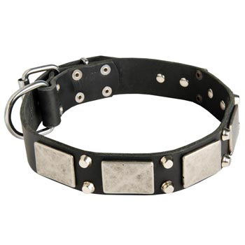 Studded Leather Black Russian Terrier Collar