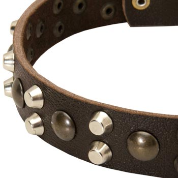 Leather Black Russian Terrier Collar with Hand Set Studs