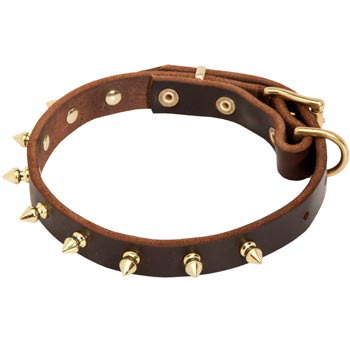 Leather Black Russian Terrier Collar with Brass Spikes
