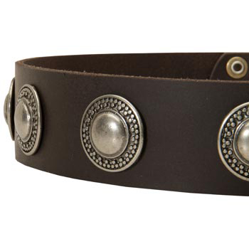 Leather Dog Collar with Conchos for   Black Russian Terrier