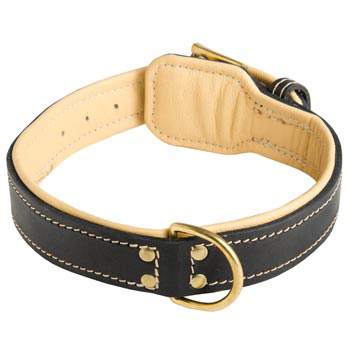 Leather Dog Collar Padded for Black Russian Terrier Off Leash Training