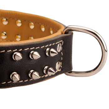 Padded Leather Black Russian Terrier Collar Spiked Adjustable for Training
