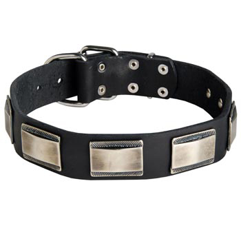 Leather Black Russian Terrier Collar with Solid Nickel Plates
