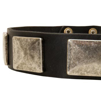 Wide Leather Black Russian Terrier Collar for Walking
