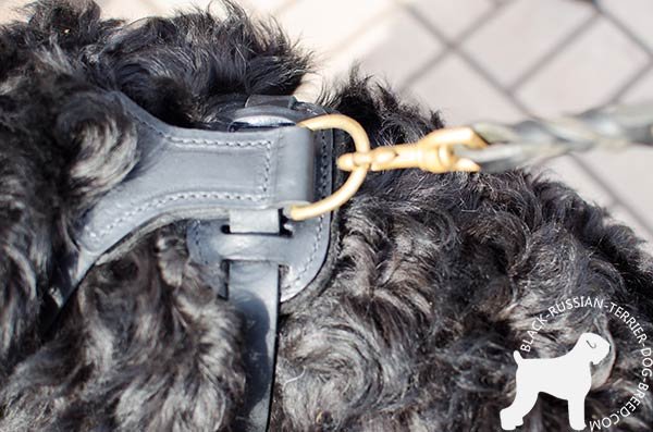 Black Russian Terrier harness with strong brass D-ring for leash attachment