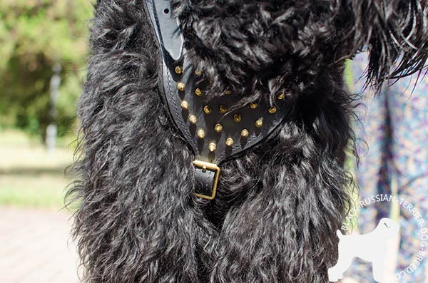 Black Russian Terrier harness with handset spikes