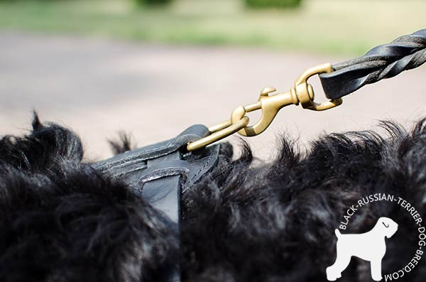 Black Russian Terrier black leather harness of high quality decorated with spikes for improved control