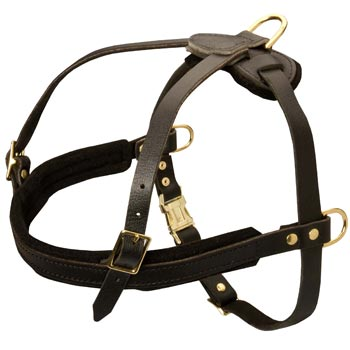 Leather Black Russian Terrier Harness for Dog Off Leash Training